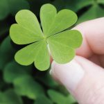 Sázkový systém Lucky 15 vám za 15 korun může vydělat 100 000!