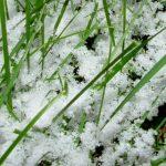Avatar uživatele Snowgrass
